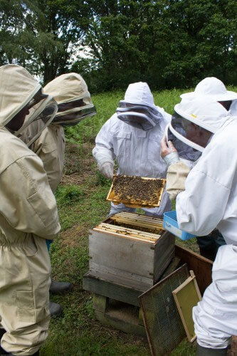 Beekeepers at looking at apiary
