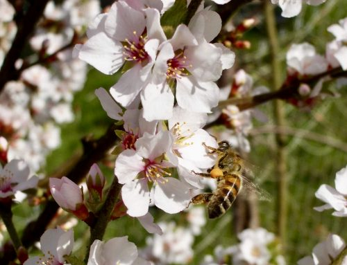 Apiary Record 28 April